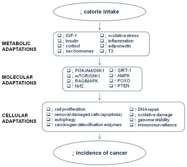 Cancer and Fasting / Calorie Restriction | UCSF Osher Center for